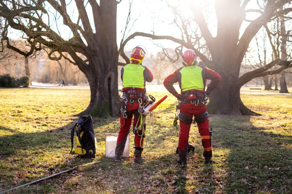 Deux bûcherons professionnels avant d'abattre un arbre