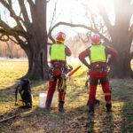 Deux bûcherons professionnels devant deux arbres à abattre